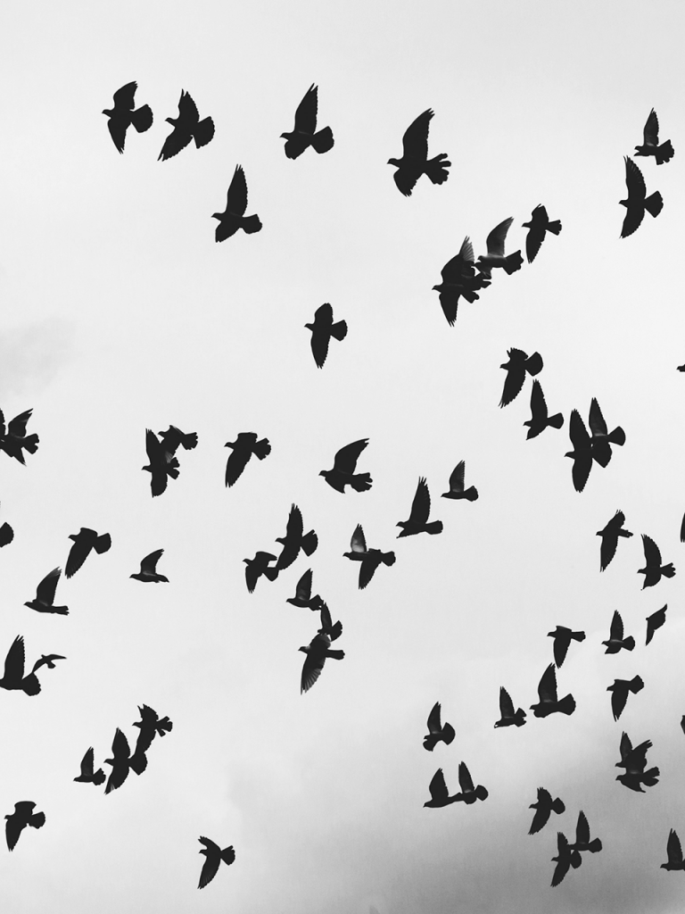 scary flock of birds flying through sky