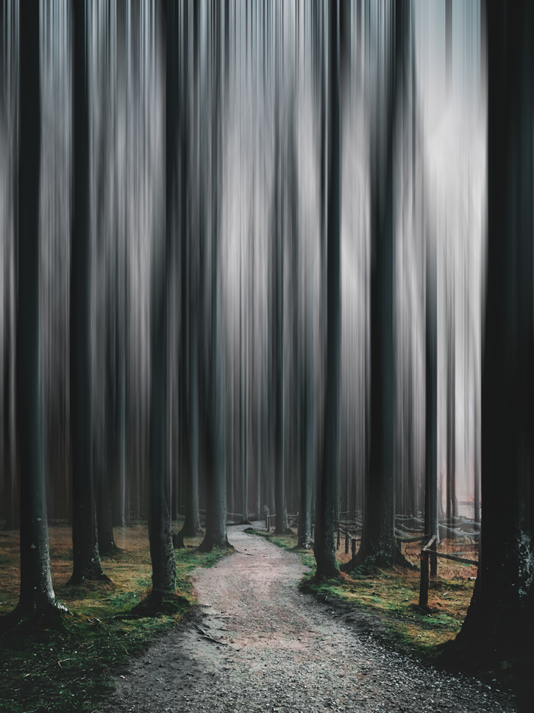 motion blur tall trees in forest for halloween photo booth background