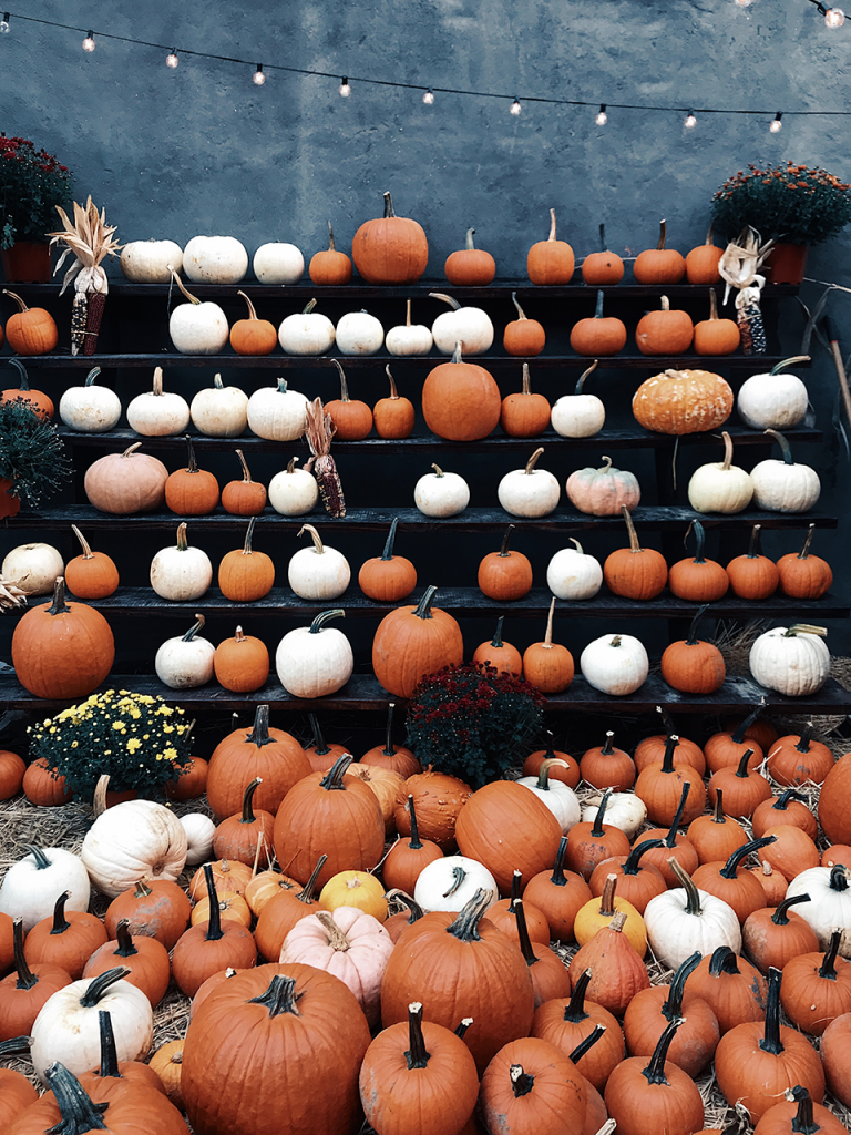 pumpkins in orange, white, yellow, lined up on shelves and ground