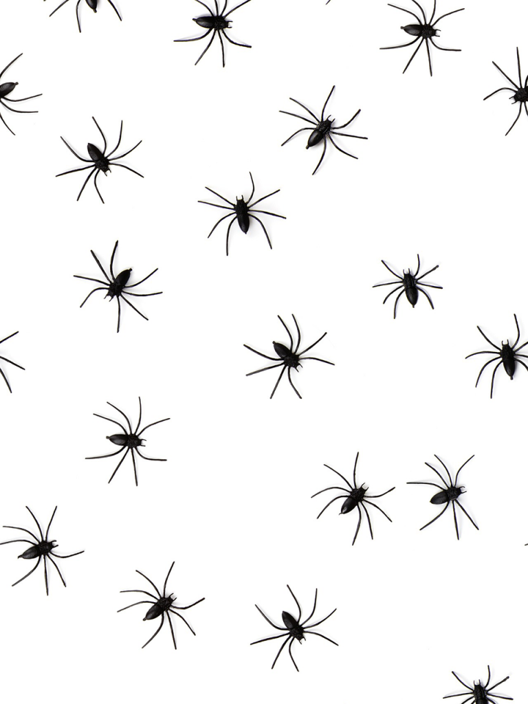 array of black spiders crawling across white photo booth background