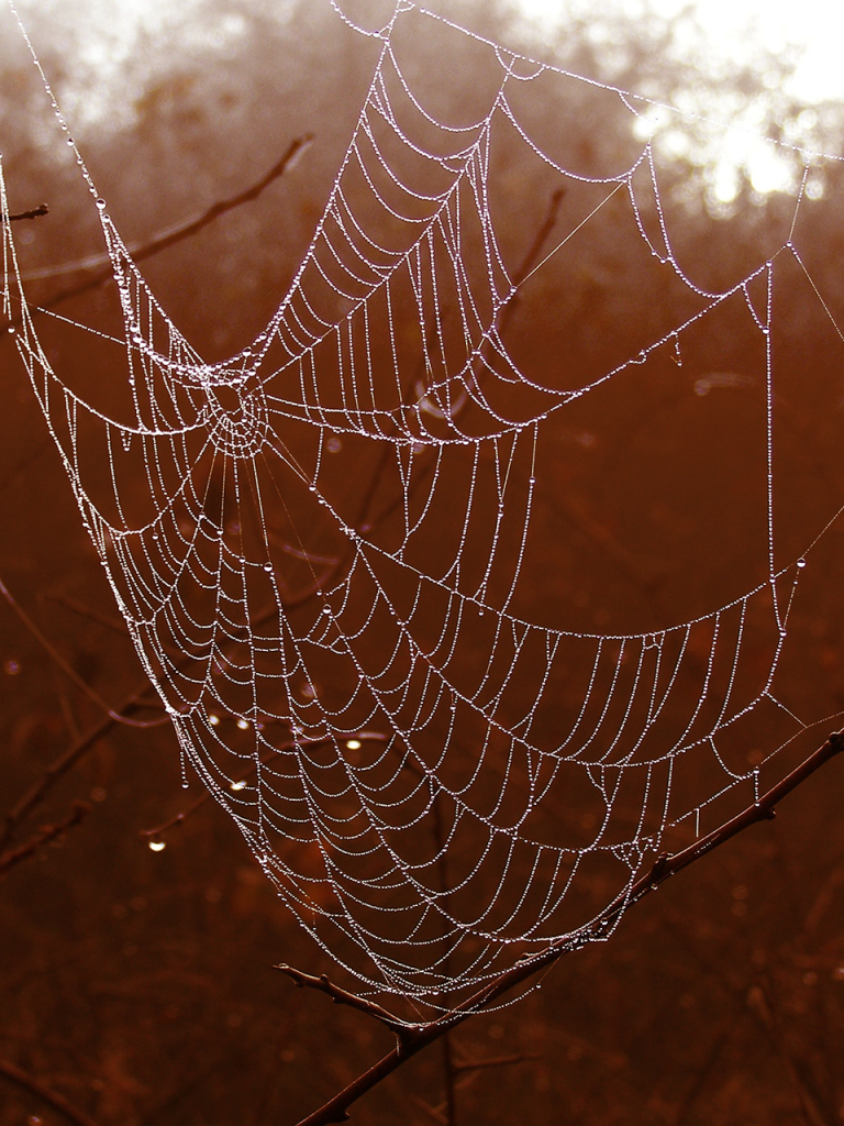 spiderweb with dew on orange forest background