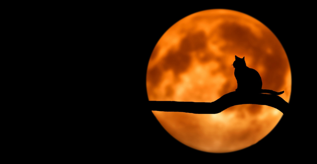 black cat standing on tree branc in front of a full moon halloween photo booth backdrop
