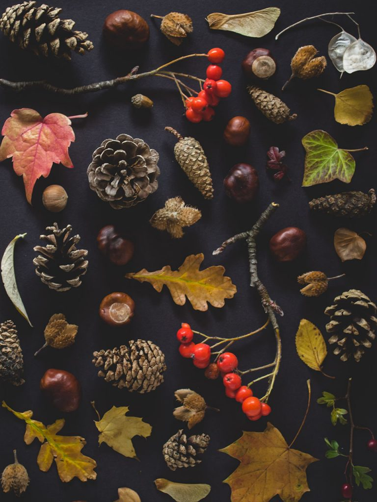 autumn leaves and pine cones in pile photo booth background