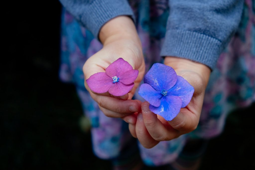 child holding two flowers on nature walk